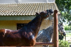 getting a shower