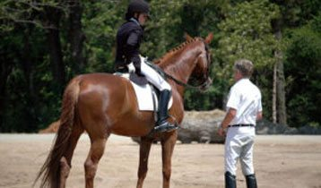 North Texas Equestrian Center Inc Warmblood Horse