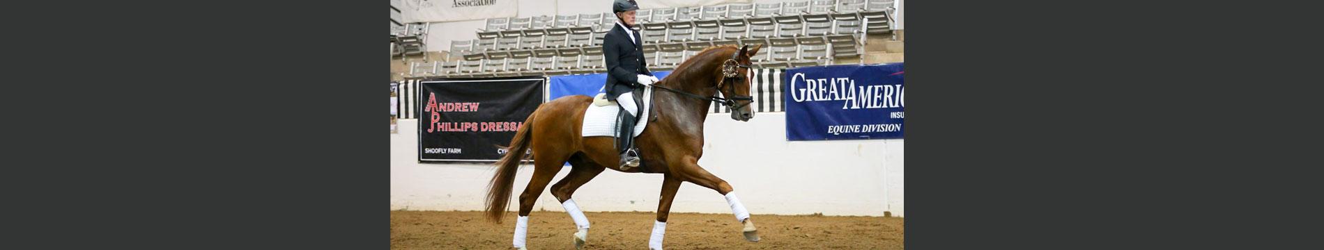 Dressage Horses For Sale North Texas Equestrian Center Inc