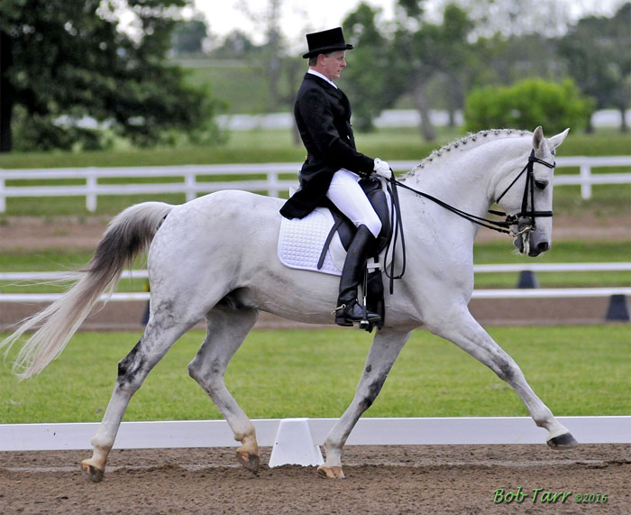 Para Dressage Ins And Outs North Texas Equestrian